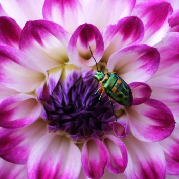 Flowers and bugs