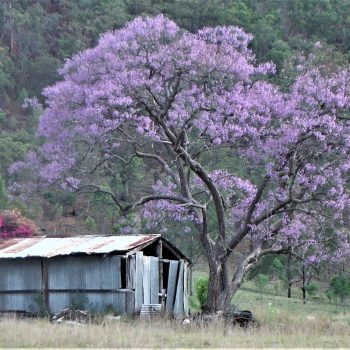Old Shed Scenic Rim Qld