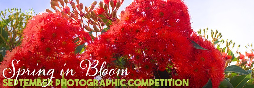 the breeze photo competition queensland