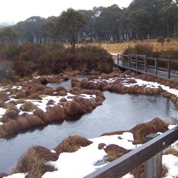 Cold Day at Polblue - Barrington Tops National Park